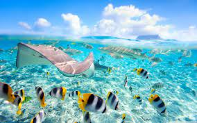 Underwater World Wallpapers - Top Free ...