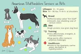 Pitbull Size Chart Complete American Bully Breeding Color Chart Pitbull Breeds