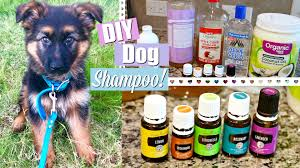 i wanted to be super careful about what i was putting in and on her so i came up with this simple natural moisturizing flea repellent shampoo