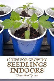10 steps to starting seedlings indoors
