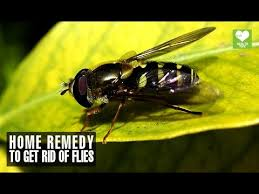 Home Reme s To Get Rid Flies Health Tips