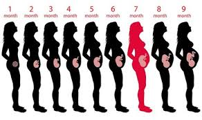 Pregnancy Chart In Months Pin On Pragency