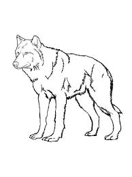Small Picture Wolf coloring pages Download and print wolf coloring pages