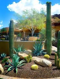 Small Picture 438 best Desert landscaping ideas images on Pinterest Desert