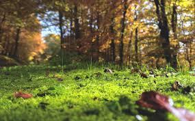 How to Grow Moss in Your Garden - Primrose Blog