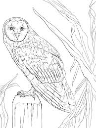 Owl Coloring Book F5to Barn Owl Coloring Page Free Printable