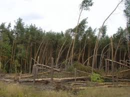 Výsledek obrázku pro les ve vichřici