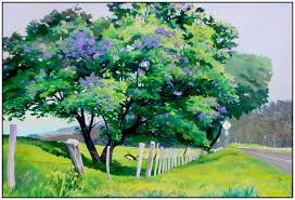 early spring jacaranda