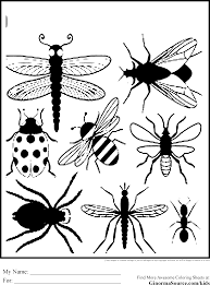 free printable insect coloring pages to print bugs and insects
