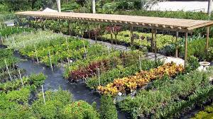our nursery has over 500 varieties of shrubs trees ground covers and fruit trees