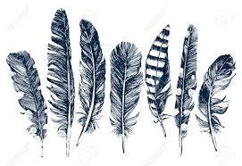 """Résultat de recherche d'images pour """"plumes sur fond blanc"""""""