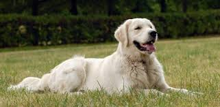 Common Skin Problems In Dogs & Their Remedies | Simply Supplements