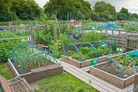 garden designs garden allotment designs ideas for