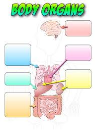 Body Organs Labelling Activity Teaching Ideas