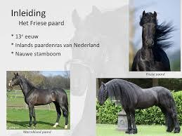 Hoeveel paarden zijn er in nederland