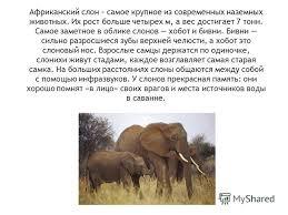 Презентация на тему Животные Африки класс Скачать бесплатно  5 Африканский