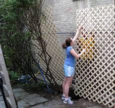 Garden Design Garden Design With Evergreen Wall Climbing Plants Climbing Plants For Privacy