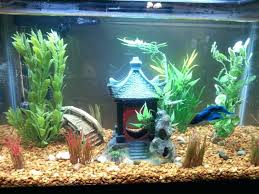 Decorative Betta Fish Bowls betta fish bowl setup gottaketchup 47