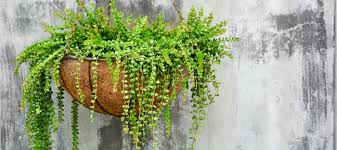 suspended plants