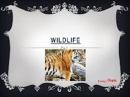 an essay on wildlife in english language an essay on wildlife in english language