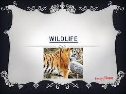 an essay on wildlife in english age an essay on wildlife in english age wildlife conservation essays