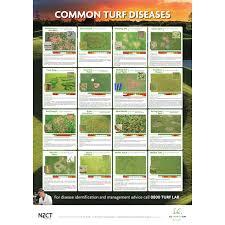 Turf Disease Common Turf Diseases Poster