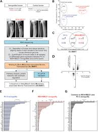 2 02 Skeletal Muscle Chart Oncotarget Osteolytic Cancer Cells Induce Vascular Axon