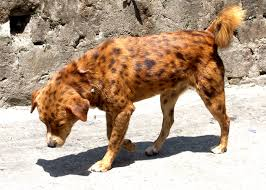 Small Picture Spotted dog from Kalimpong Mongrel Wikipedia the free