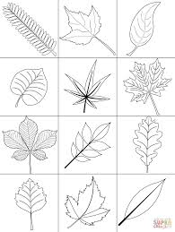 View Coloring Pages Leaves Free Printables Background