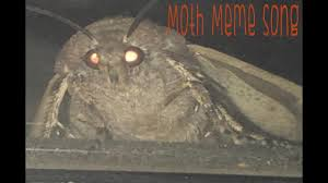 Moth Meme Song I Love Lamp Meme Compilation Video