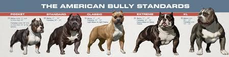 Primal Bullies Prestige American Bully Breeder