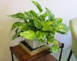 office indoor plants. Indoor Plants Names Office Plant I