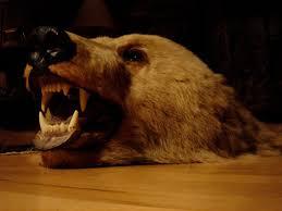 marvellous bear skin rug fireplace photo decoration inspiration