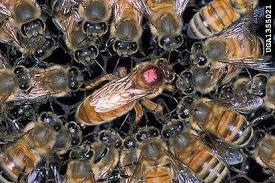 Контрольная работа Удивительная жизнь пчёл класс УМК Гармония hello html 568bb767 jpg