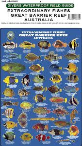Divers Fish Identification Card Slate Great Barrier Reef Extraordinary Fishes Fg030l