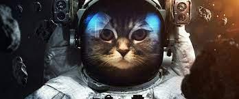 Astronaut Cat Space 4K Wallpaper #48