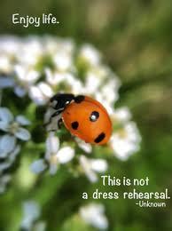 Ladybug Quotes Best Quotes About Ladybugs Holaklonecco