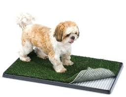artificial grass for pets. What Artificial Grass For Pets