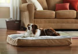 Amazon Animal Planet Sherpa Pet Bed Animal Planet