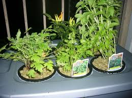 Hydroponics Herb Garden Kitchen Hydroponics At Home And For Beginners 11 Steps With Pictures