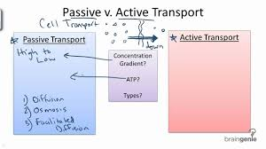 Active Vs Passive Transport Venn Diagram 2 2 Passive Vs Active Transport Youtube