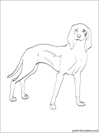Kleurplaten Hond Italiaanse Gratis Kleurplaten