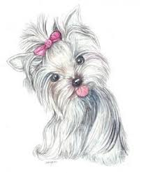 You can download printable coloring pages from this website for free, to help us do visit our sponsors to keep. Yorkie Coloring Pages And Free Printable Coloring Pages On Pinterest Puppy Art Dog Art Yorkie Dogs