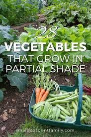can you still grow some of your own food if your yard has shady spots