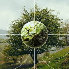 The Thermodynamic Theory Of Ecology Quanta Magazine