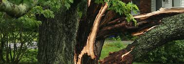 we have all had our fair share of storms and the damages they have done to your lawn or lot wallace tree service is here to help you pick up the pieces