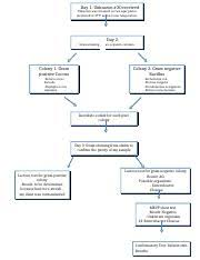 Microbiology Unknown Test Flow Chart Flow Chart Microbiology Lab Day 1 Unknown 30 Received