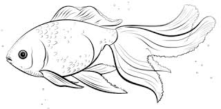 Small Picture Oranda Goldfish coloring page Free Printable Coloring Pages