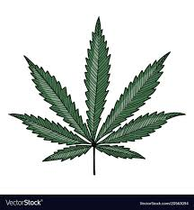 Weed Designs Cannabis Leaf Sketch For Your Design