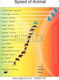 Animal Speed Chart Fastest Animal Chart Vector Photo Free Trial Bigstock